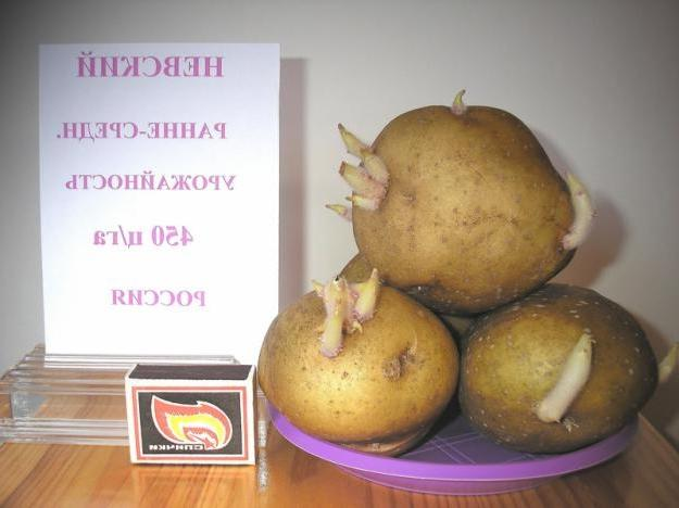 Семенные клубни Невского