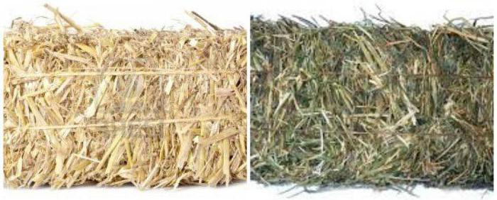 Солома (слева) и сено (справа)