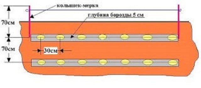 Схема высадки картофеля