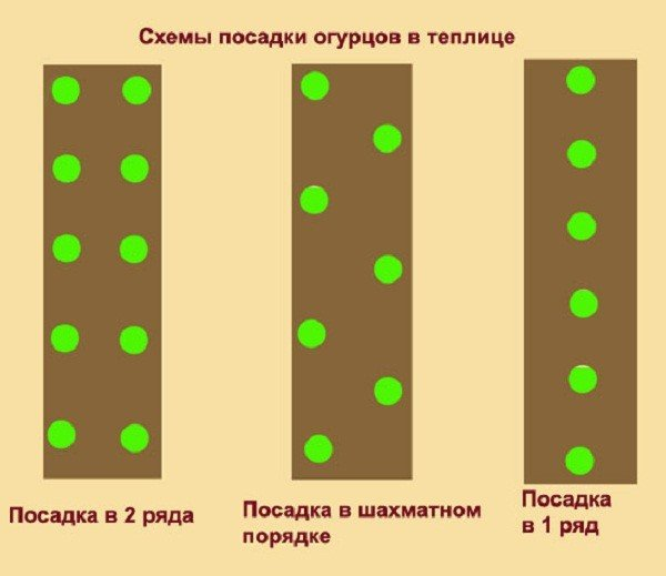 Схемы высадки огуречной рассады