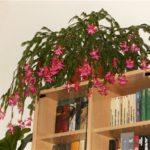 Шлюмбергера на книжном шкафу
