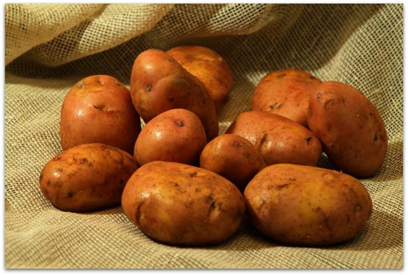 сорт картофеля журавинка