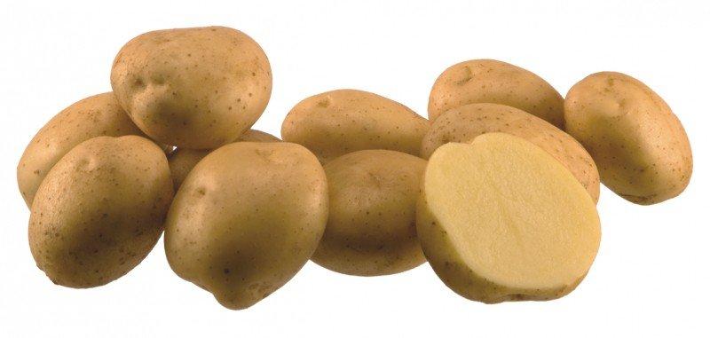 Сорт сладкого картофеля Санте