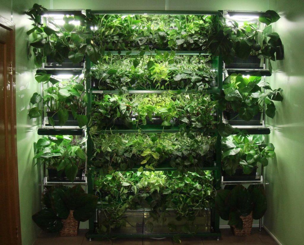 Прибыльный бизнес: выращивание зелени на продажу 63