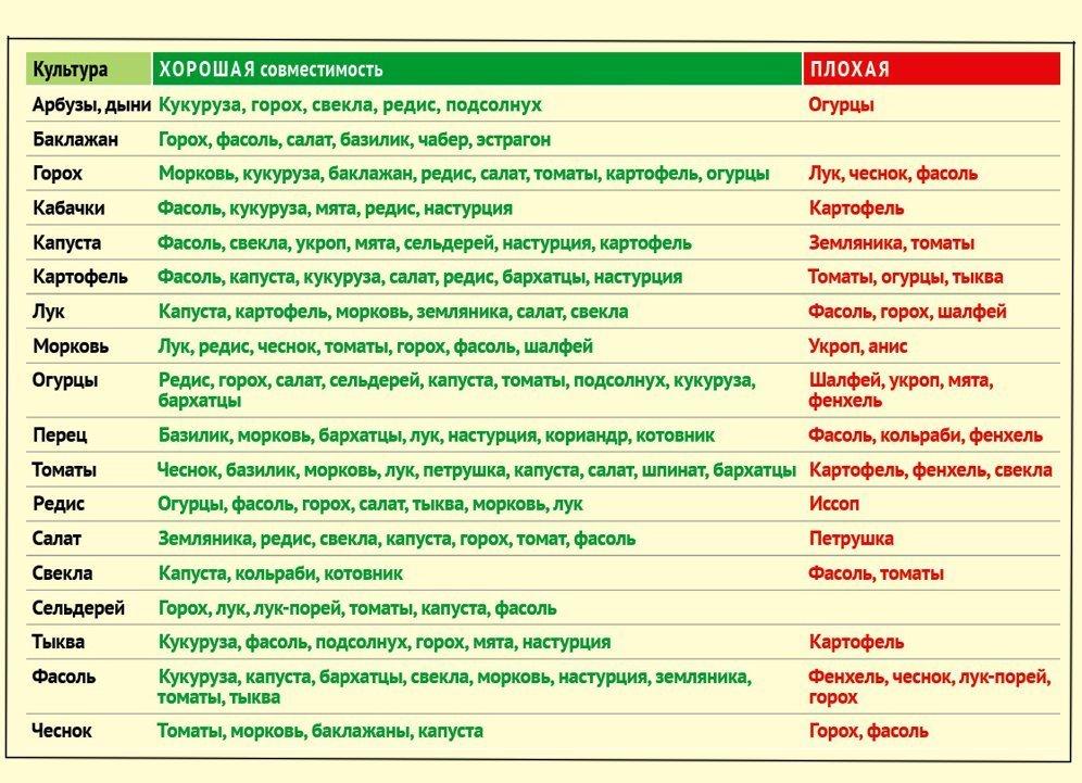 таблица совместимости овощей