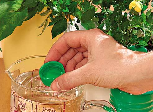 Раствор для подкормки аукубы