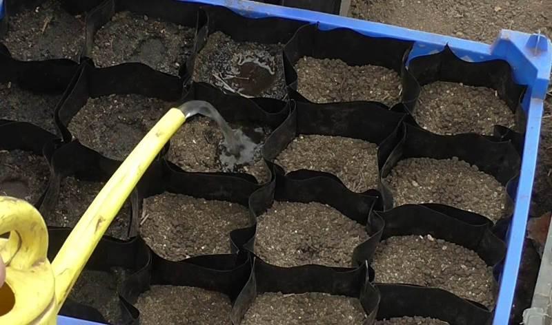 Высадка семян огурцов на рассаду