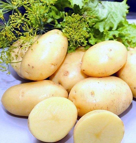 Внешний вид сорта картофеля Императрица