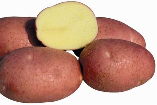 Корнеплоды сорта Беллароса