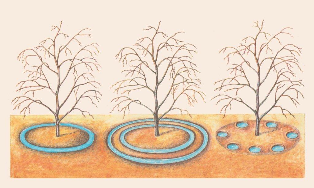 Виды поливочных лунок