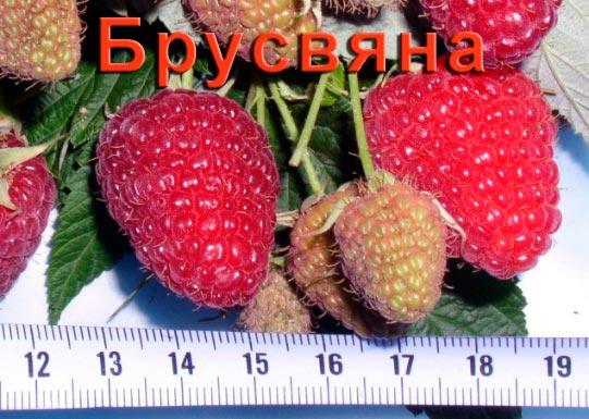 Ягоды малины Брусвяна описание сорта