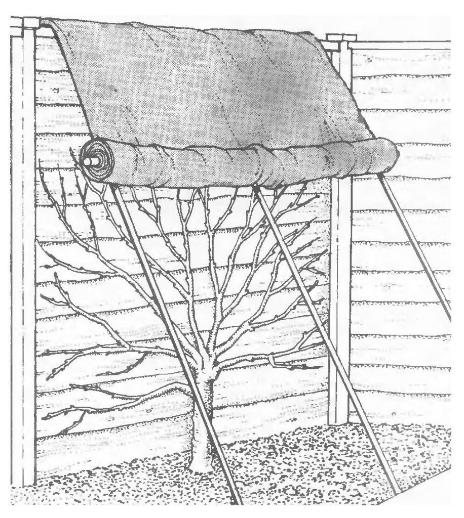 Защита дерева от весенних заморозков