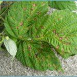 Зелёная мозаика на листьях