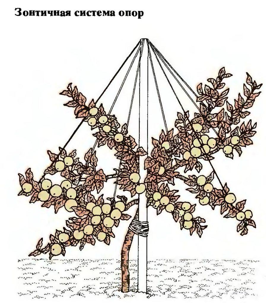 Зонтичная опора для дерева