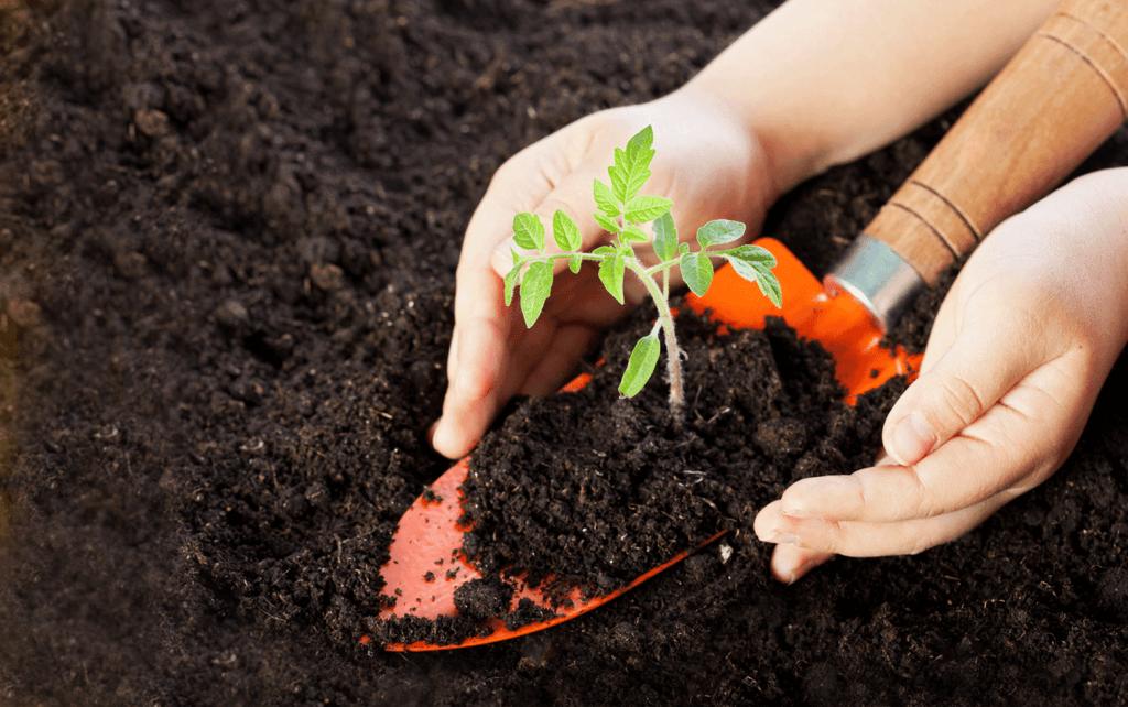 Почва для рассады помидоров