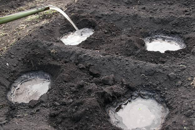 Полив почвы перед высадкой рассады