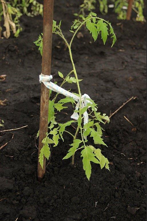 Опора для томатов