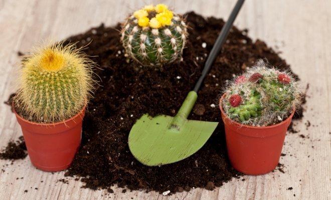 Грунт и кактусы