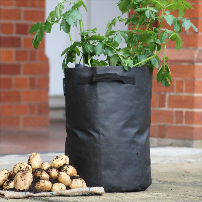 Картофель дома в мешках