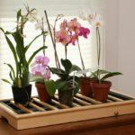 Подставка для группы растений