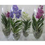Оформление орхидей в футуристическом стиле