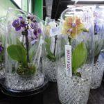 Оформление орхидей в современном стиле