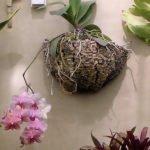 Настенный вариант размещения орхидей