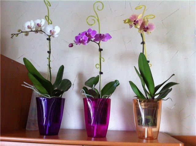 Орхидеи в специальных подставках