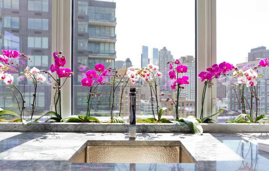 Цветущие орхидеи на окне