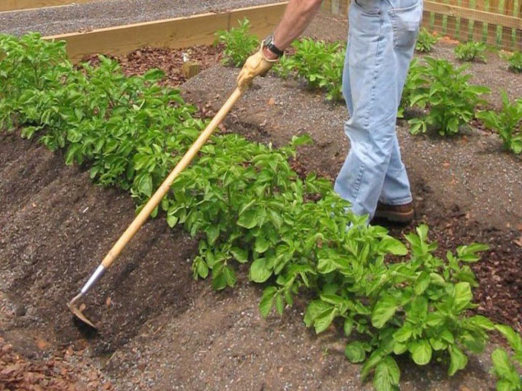 Подновление земляных гребней