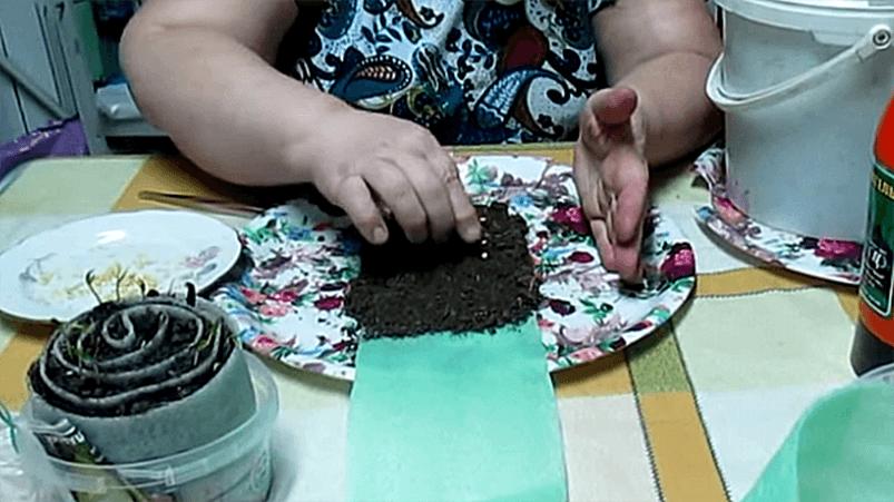Раскладка семян в будущей улитке
