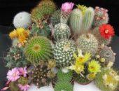 Разные виды кактусов