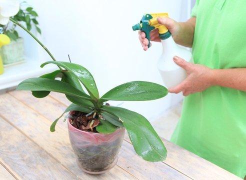 Увлажнение орхидеи
