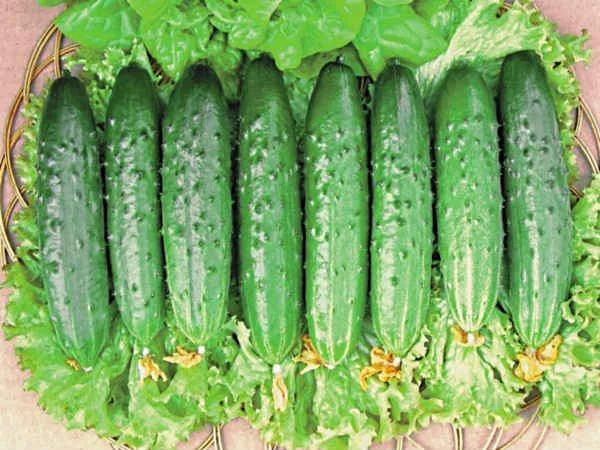 Зелёные огурцы