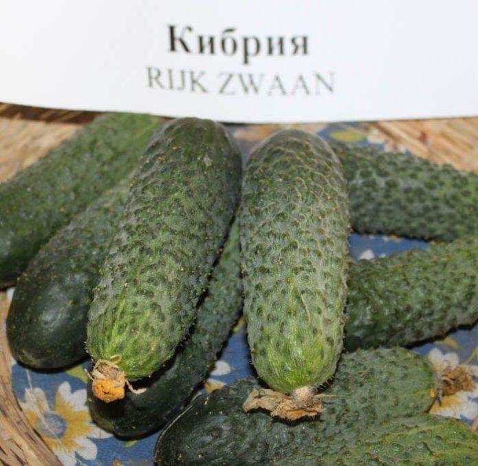Плоды Кибрии тёмно-зелёные с бугорками