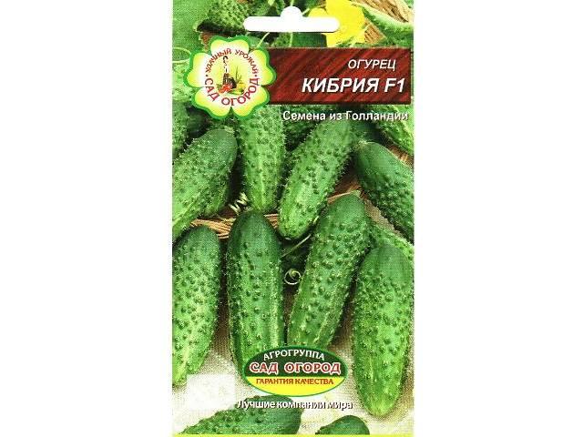 Семена огурца Кибрия