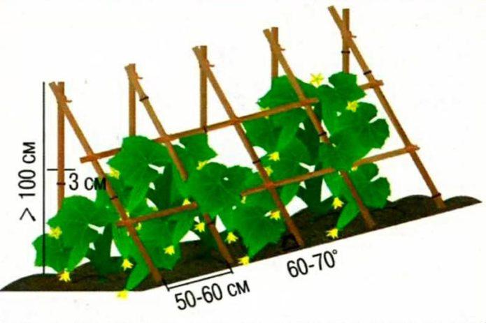Схема посадки огурцов под шпалерой