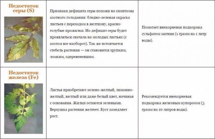 Таблица с характеристиками недостатка серы и железа у томатов