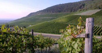 Подкормки винограда в июле