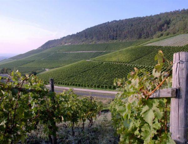 О важности июльских подкормок винограда