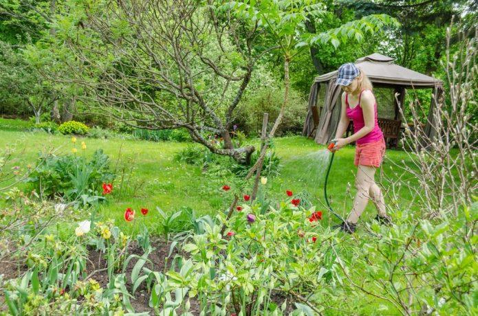 Девушка поливает тюльпаны в саду