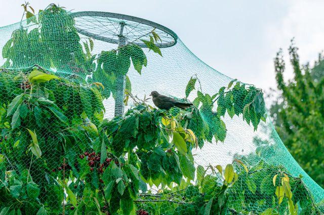 Сетка от птиц на дереве