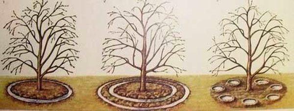 Способы полива дерева