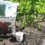 Подкормка винограда комплексным удобрением