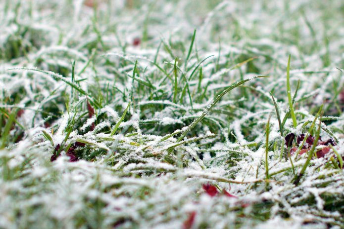 Газон в снегу