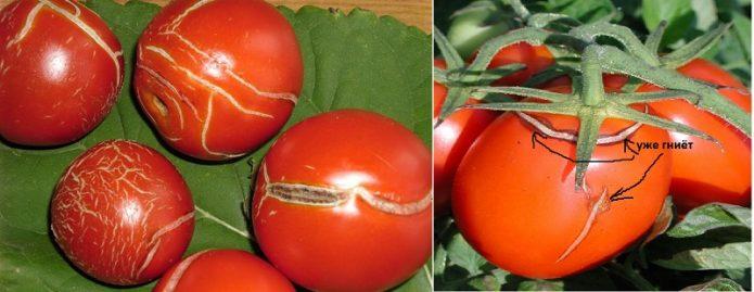 Растрескивание помидоров