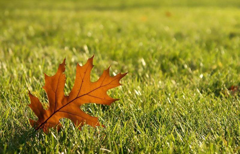 Молодой газон осенью