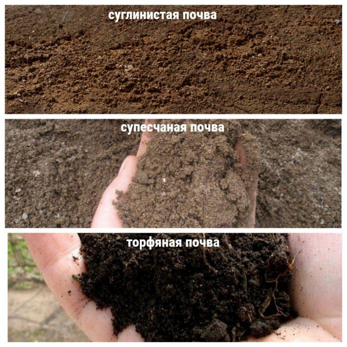 почвы для щавеля