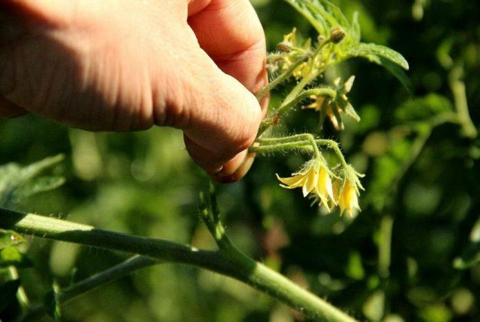 Прищипывание цветочной кисти