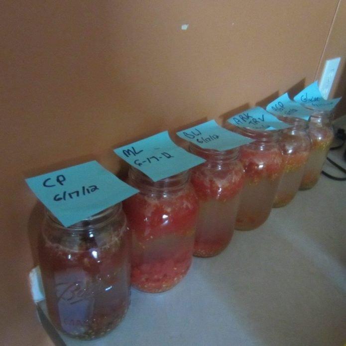 Сбраживание мезги томатов закончилось